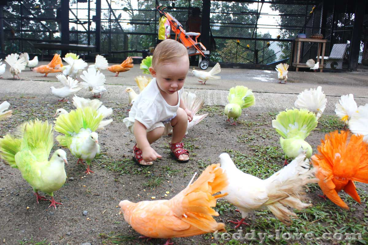 Ребенок и цветные голуби