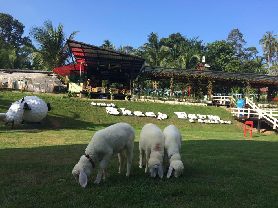 Овечья ферма на Самуи